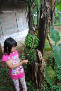 Pohon pisang aneh tumbuh di pekarangan warga Jalan Nakula-Sadewa IV, RT 1 RW 3 Kembangarum Kelurahan Dukuh Kecamatan Sidomukti Salatiga.