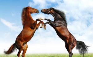 Kuda Sehat...